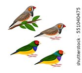 finches | Shutterstock .eps vector #551040475