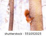Cute Little Red Eurasian...
