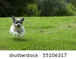 Stock photo cute white dog running outside through the yard looks like she s flying 55106317
