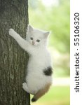 White kitten with bright blue eyes trying to climb a tree - stock photo