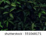 real tropical leaves background ... | Shutterstock . vector #551068171