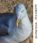 Small photo of Curious albatross with startling yellow eye