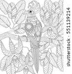 exotic tropical zentangle bird... | Shutterstock .eps vector #551139214