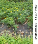 Small photo of 2 areas of 2 plant species those were separated by rocks and soil area.