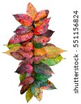 nature color. color leaves... | Shutterstock . vector #551156824