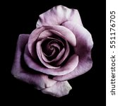 Small photo of Dark purple roses background, Purple rose isolated on black background, Greeting card with a luxury roses, Image dark tone