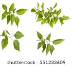 Green Lilac Leaves. Isolated O...