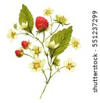 strawberries branch with... | Shutterstock . vector #551237299