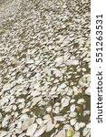 texture of shells beach | Shutterstock . vector #551263531