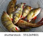 trout fishing | Shutterstock . vector #551269801