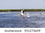 flock of pelicans.end of danube ... | Shutterstock . vector #551273659
