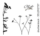 Set Of Stems And Branches Of...