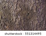 Texture Of Larch Bark....