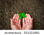 men hands are planting the... | Shutterstock . vector #551321881