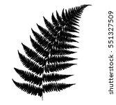 fern 23. silhouette of a fern... | Shutterstock .eps vector #551327509