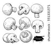 champignon mushroom hand drawn... | Shutterstock .eps vector #551331571