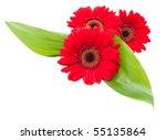 red gerbera flowers with green...   Shutterstock . vector #55135864
