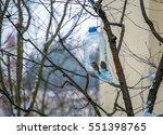 sparrow feeds of homemade bird... | Shutterstock . vector #551398765