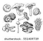 mushroom hand drawn vector... | Shutterstock .eps vector #551409739