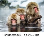 group of japanese macaques...   Shutterstock . vector #551438485