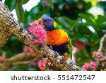 rainbow lorikeet eating the... | Shutterstock . vector #551472547