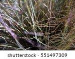 Autumn Grass Texture. Image Of...