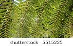 background of backlit ribbed... | Shutterstock . vector #5515225
