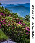 Small photo of Rhododendron Blooms in Blue Ridge Mountains during June