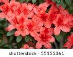 azalea | Shutterstock . vector #55155361