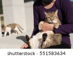 fat tabby holded by a woman in... | Shutterstock . vector #551583634