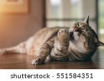 fat tabby cat sleep on the... | Shutterstock . vector #551584351