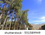 pine trees against blue sky... | Shutterstock . vector #551589949