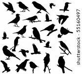 25 Silhouette Birds