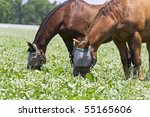 Two Horses In A Pasture With...