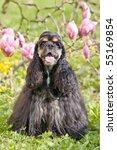 portrait of posing american...   Shutterstock . vector #55169854