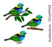 tangara chilensis | Shutterstock .eps vector #551699965