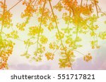 soft blurred the colorful... | Shutterstock . vector #551717821