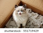 Stock photo cute little kitten in cardboard box closeup 551719429