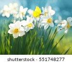Beautiful Daffodils On Sunshin...