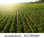 aerial view of field growing... | Shutterstock . vector #551780089