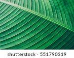 details of big green leaf ... | Shutterstock . vector #551790319