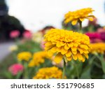 flower in the garden with clear ... | Shutterstock . vector #551790685