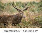 majestic red deer stag cervus... | Shutterstock . vector #551801149