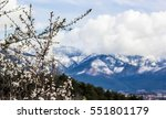 blossoming tree on a background ... | Shutterstock . vector #551801179