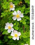 Rosehip Flower  Green...