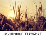 close up grass flower with... | Shutterstock . vector #551902417