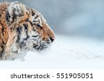 portrait of young siberian... | Shutterstock . vector #551905051