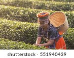 kid and green tea field in shui ... | Shutterstock . vector #551940439