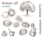 walnut plant set. the... | Shutterstock .eps vector #551953771