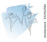 flower iris doodle flourish...   Shutterstock .eps vector #551962984